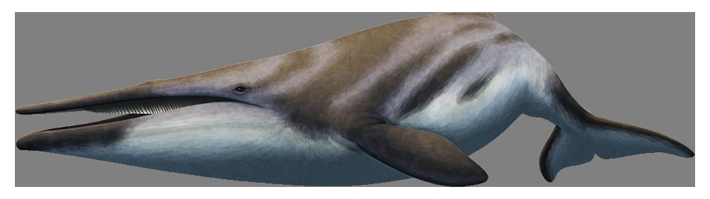 Waharoa