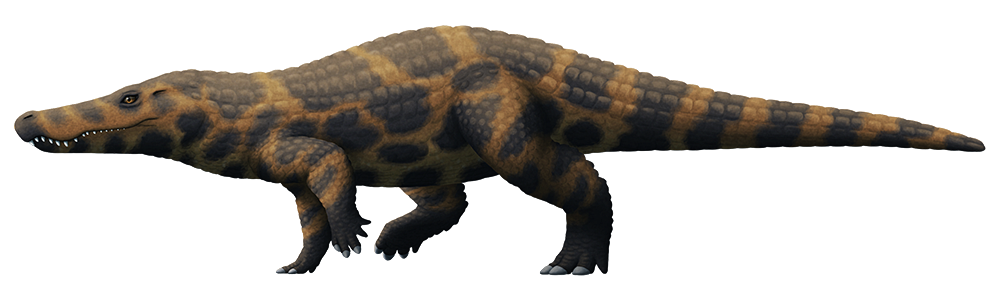 An illustration of an extinct crocodilian. Its body is heavily armored in body osteoderms, and it has long upright legs that end in oddly hoof-like toes.