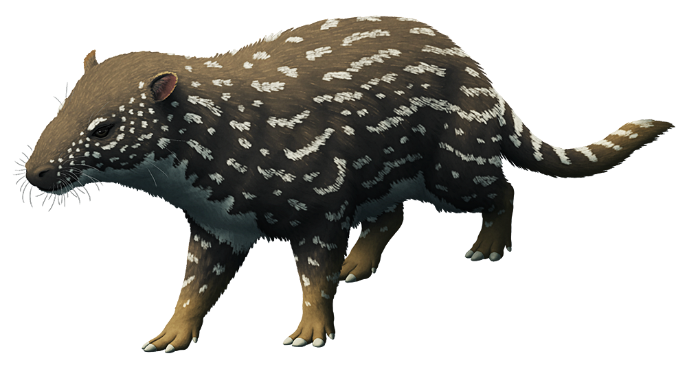 An illustration of an extinct mammal related to the ancestors of modern hoofed odd-toed ungulates. It has a small stocky body and five toes on its feet with small hooves, walking on the middle three.
