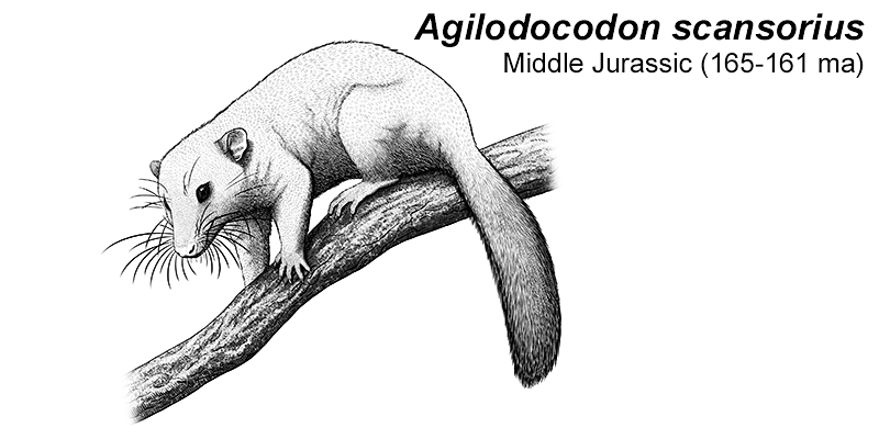 Month of Mesozoic Mammals #05: Climbing Trees