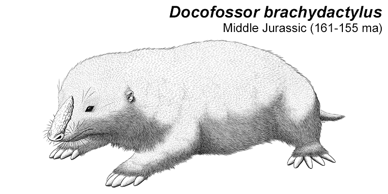 Month of Mesozoic Mammals #07: Digging Down