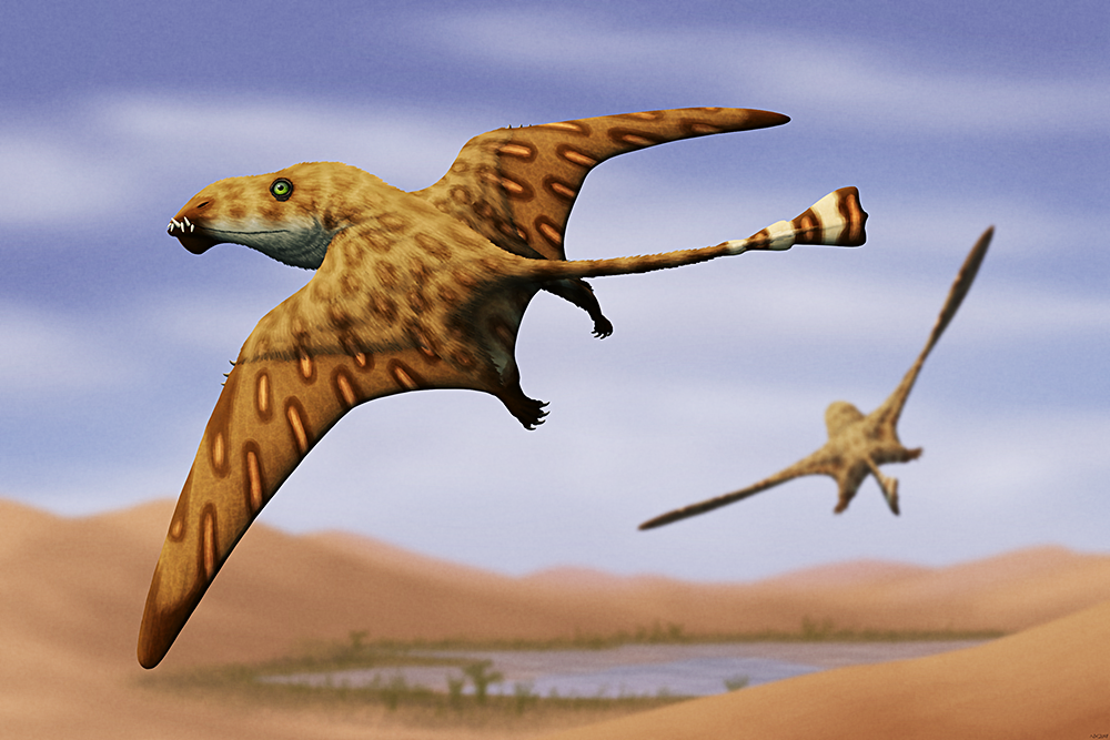 An illustration of two extinct pterosaurs, flying over a desert landscape with an oasis between sandy dunes. They have large heads with protruding teeth at the tips of their jaws, small crests on their lower jaws, long triangular wings, and long thin tails ending in blunt triangular vanes.