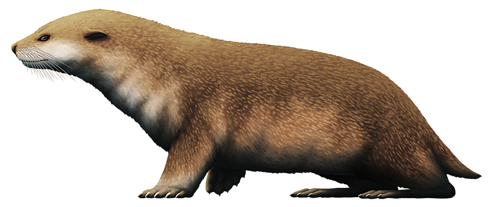 An illustration of an extinct early seal. It resembles a cross between a seal and an otter.