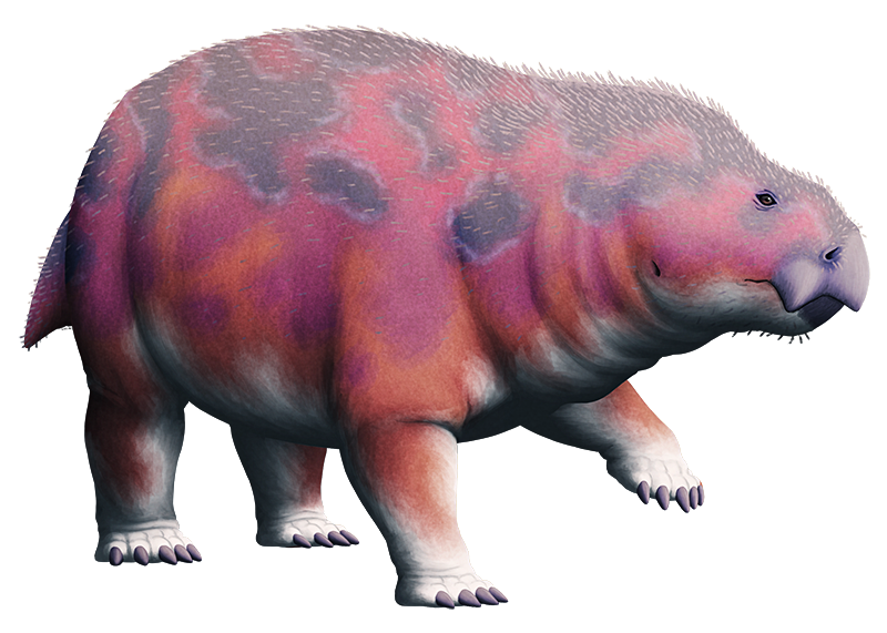 An illustration of an extinct synapsid, a reptile-like relative of mammals. It has a build like an elephant, with a large chunky body and fully upright limbs. Its short deep snout ends in a turtle-like beak.