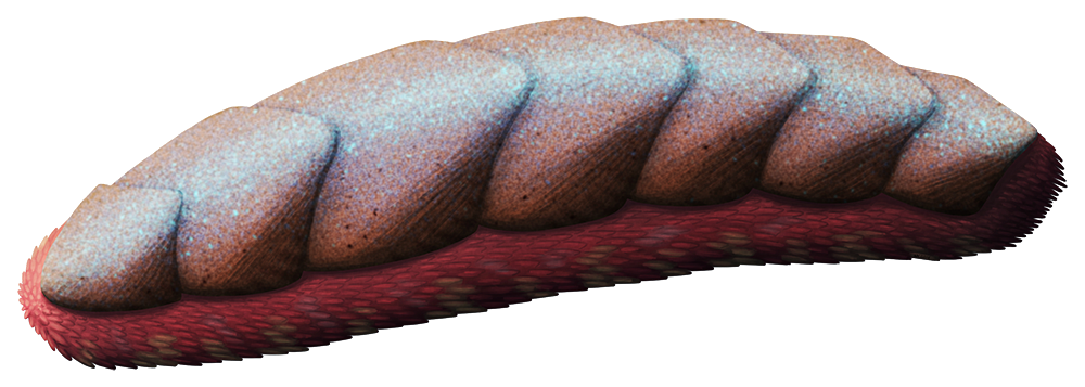 An illustration of an extinct worm-like animal. It has a row of seven large armor places along its back, and many tiny spines covering the rest of its body.