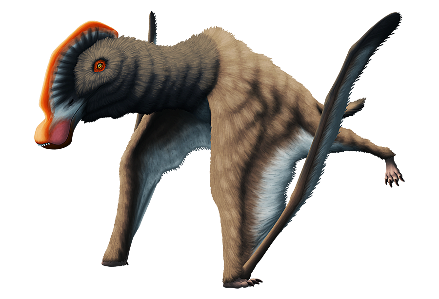 "An illustration of an extinct pterosaur. The tip of its beak is oddly bulldog-like, with protruding teeth and drooping ""lips"". It also has a long low crest along the top of its head, and a coat of fluffy fur over its body."