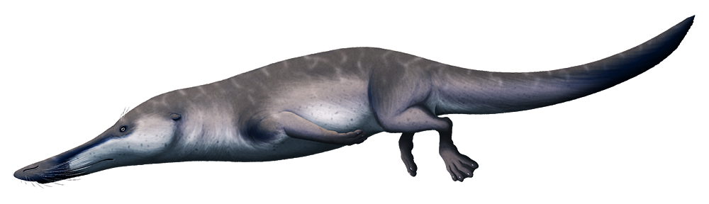An illustration of an extinct early whale. It has a long crocodile-like snout, an otter-like body and tail, and webbed feet.