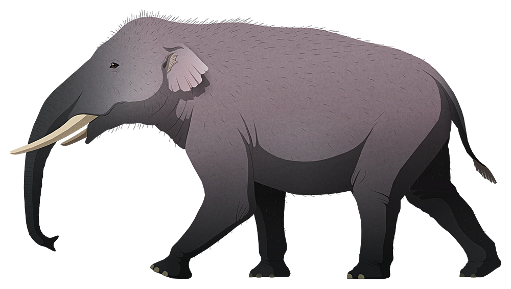 A stylized illustration of an extinct dwarf elephant. It has four tusks – two short straight ones in its upper jaw, and another two smaller ones in its lower jaw.