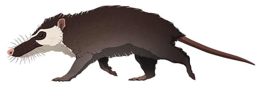 A stylized illustration of an extinct mammal. It resembles a large rat or opposum, with a proportionally large head and a long snout.