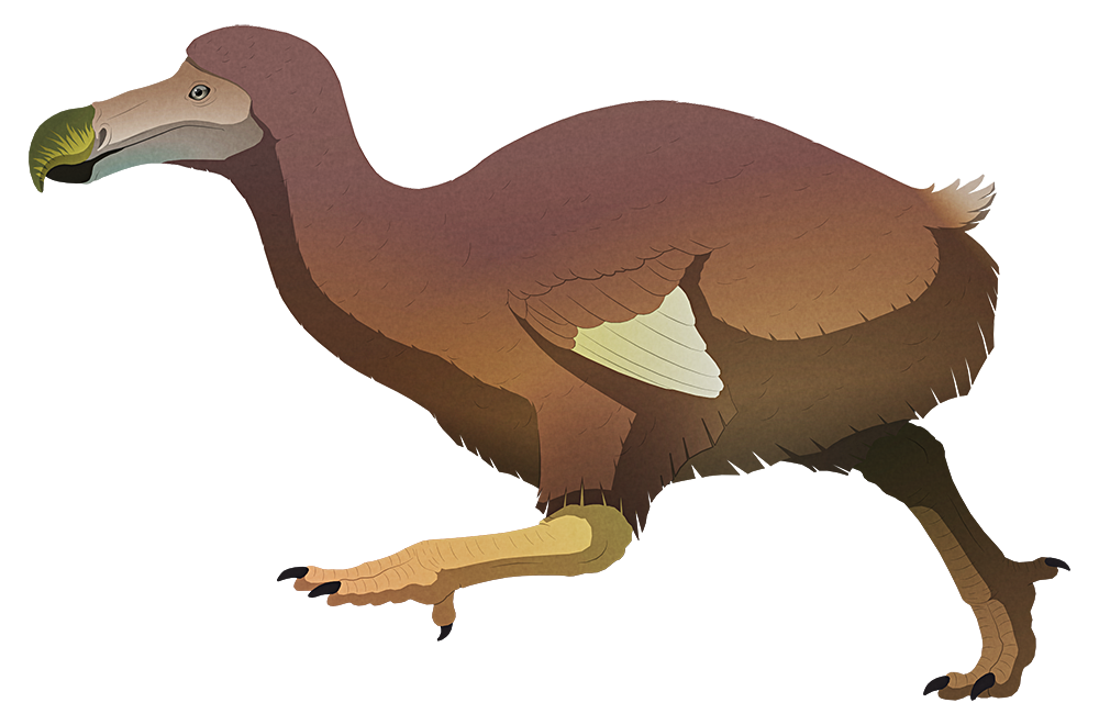 A stylized illustration of the dodo, an extinct giant flightless pigeon. It has a vulture-like head with a long hooked beak, small wings, stout legs, and a stumpy tufted tail.