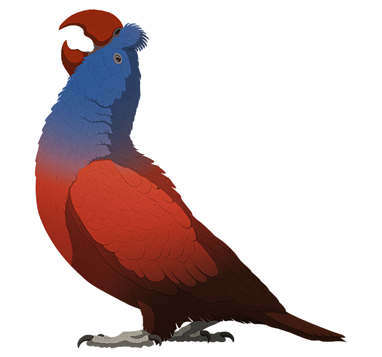 A stylized illustration of an extinct parrot. It has a large curved beak and a tufted crest on its head.
