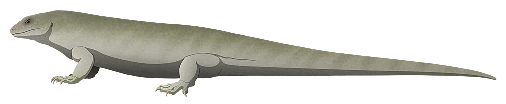 A stylized illustration of an extinct giant lizard. It has a proportionally small head and chunky body, and a very long tail.