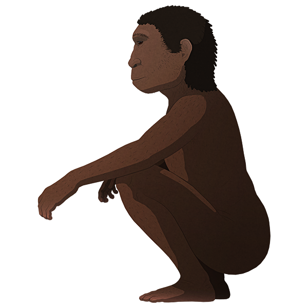 A stylized illustration of an extinct small archaic human, in a resting squat position. They have a shallow sloping forehead and a deep jaw lacking a prominent chin, and proportionally short legs with large feet.
