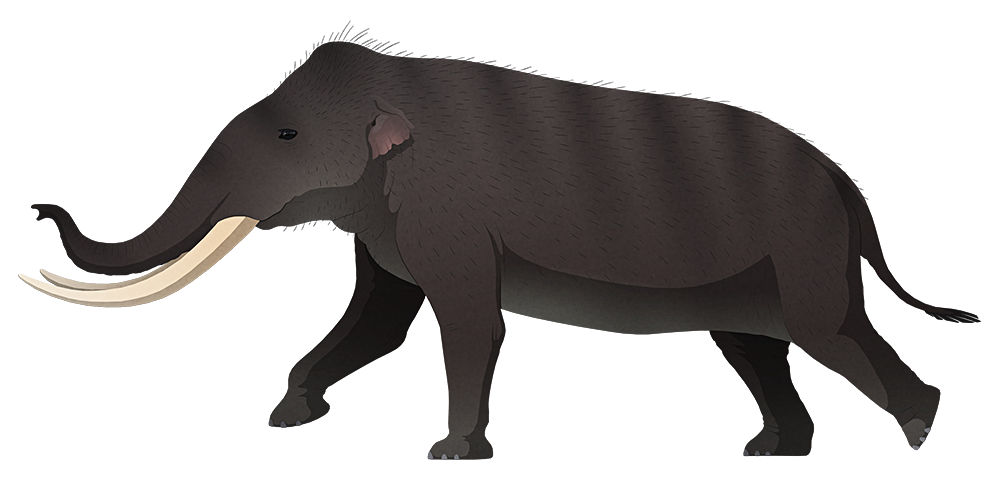 A stylized illustration of an extinct dwarf elephant. It has curved tusks, small ears, and very proportionaly short stumpy legs.