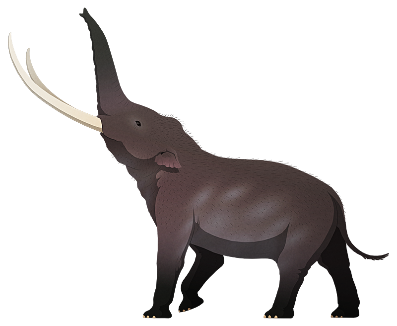 A stylized illustration of an extinct dwarf elephant. It has long gently curving tusks and small ears.