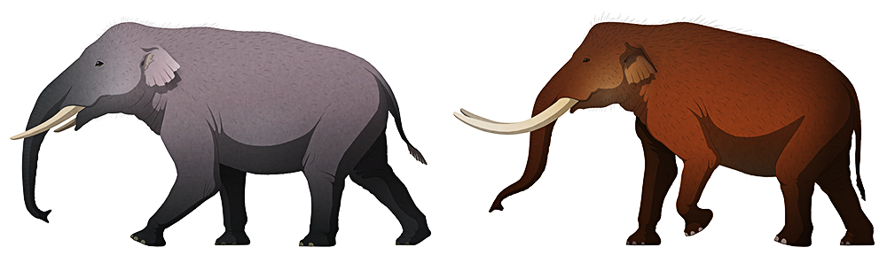 A stylized illustration of two extinct dwarf elephants. One has four tusks (two in its upper jaw and two in its lower), and the other has long curving tusks.