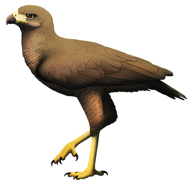 An illustration of an extinct bird of prey. It resembles an eagle with especially long legs.