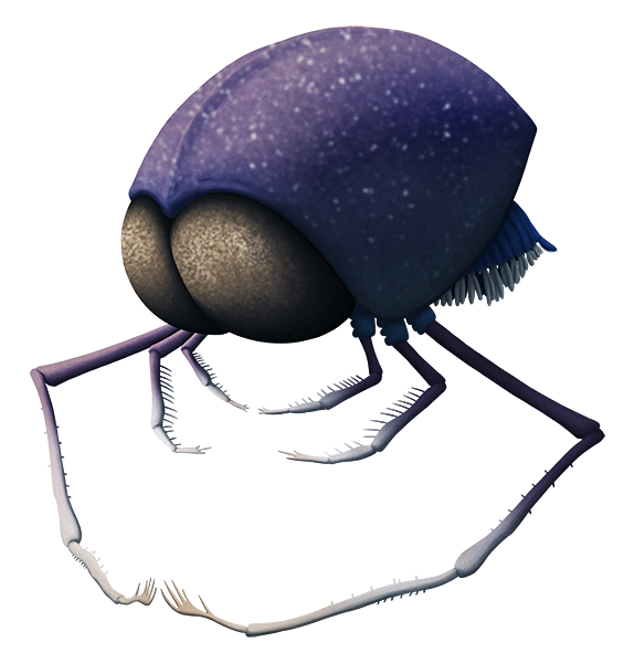 An illustration of an extinct crustacean. It resembles a bizarre sci-fi alien, with an oval body, very large eyes at the front, and three pairs of very long spiny legs on its underside.