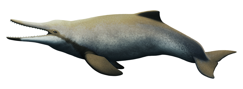 An illustration of an extinct dolphin-like whale. It has a long snout full of teeth, pointed at the front of its jaws and serrated further back.