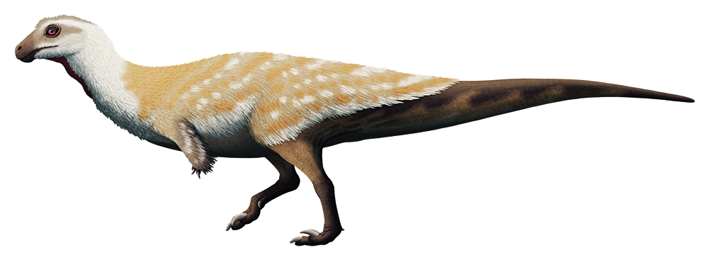 An illustration of a bipedal dinosaur. It has a small head with a short downward-curving snout, tiny arms, and odd feet, walking on just its middle toe with the others held off the ground.