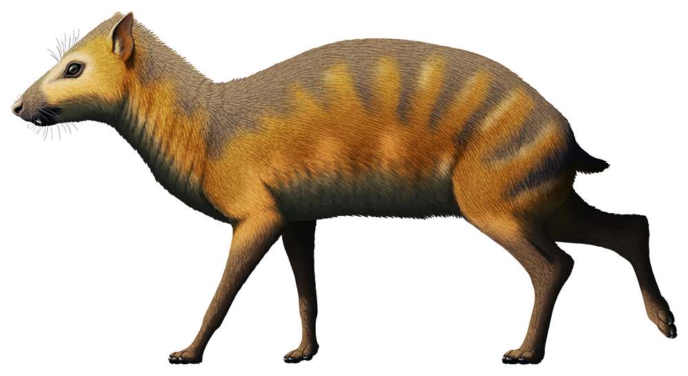 An illustration of an extinct hyrax. It resembles a deer, with long slender legs, but instead of hooves it has small paws.