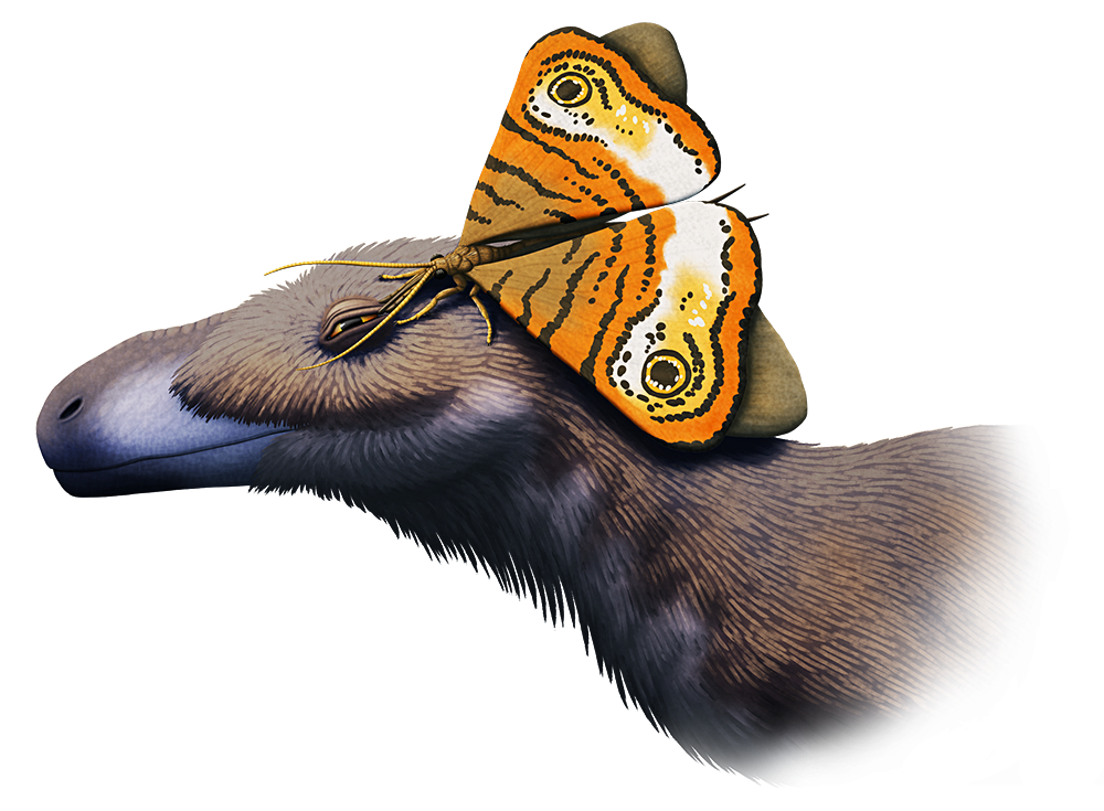 An illustration of a large butterly-like insect, sitting on the head of a feathered tyrannosaur. It's using its long proboscis to drink tears from the corner of the dinosaur's eye.