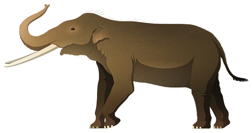 A stylized illustration of an extinct dwarf elephant. It has long straight tusks and small ears.