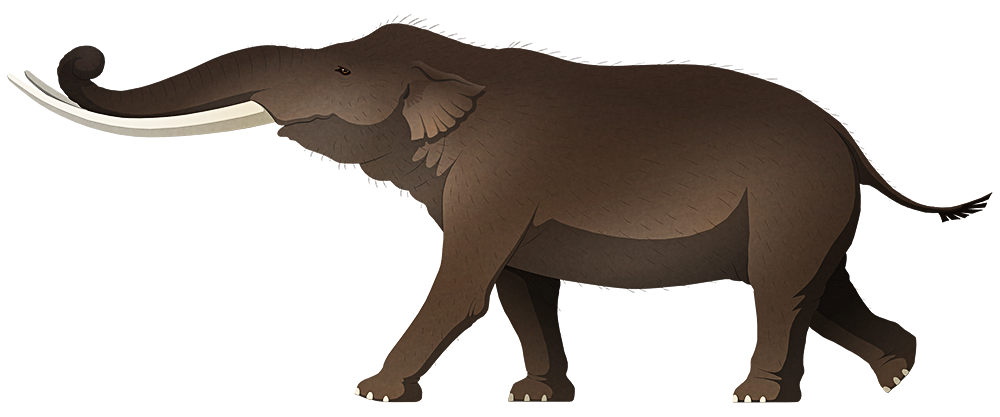 A stylized illustration of an extinct dwarf elephant. It has long gently curving tusks and proportionalyl short legs.