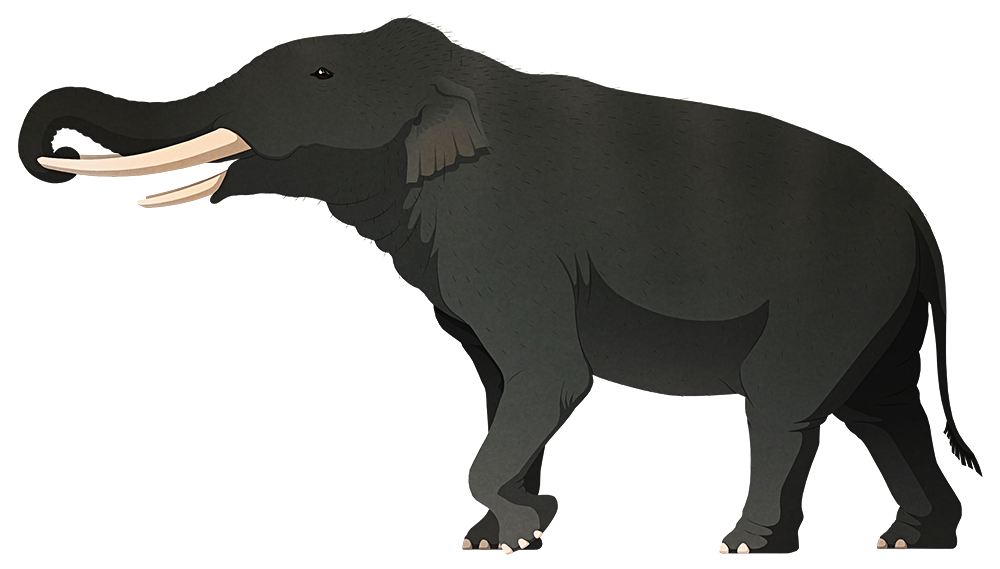A stylized illustration of an extinct dwarf elephant. It has four straight tusks, two longer ones in its upper jaw and two shorter ones in its lower jaw.