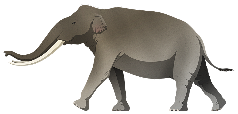 A stylized illustration of an extinct dwarf elephant. It has long curving tusks and small ears.