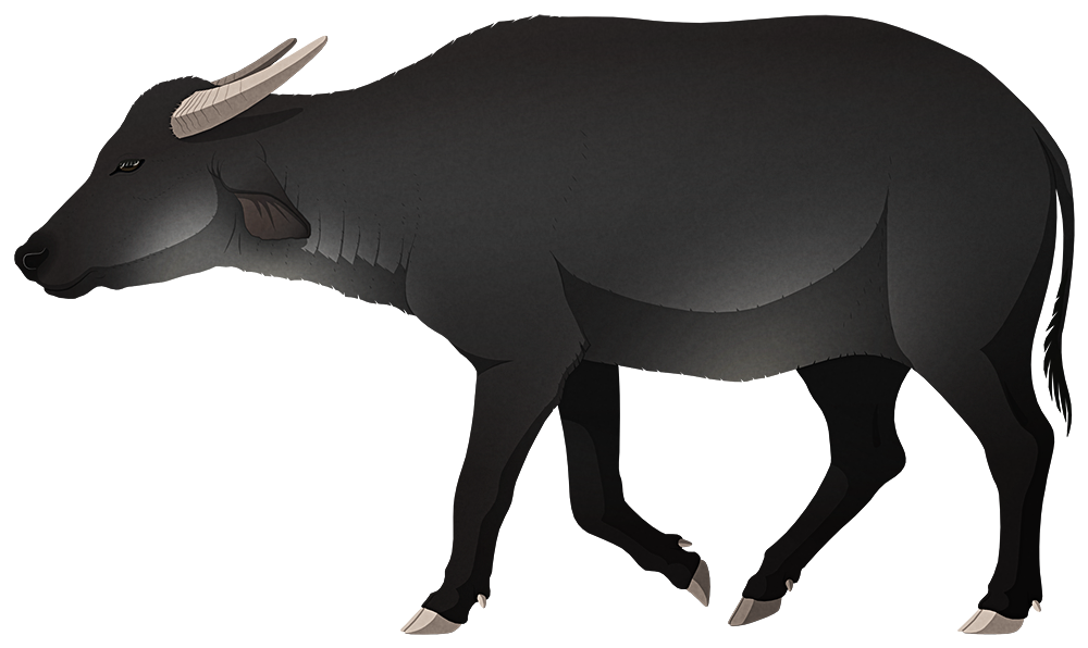 A stylized illustration of an extinct dwarf water buffalo. it has short curved horns, drooping ears, and a chunky body.
