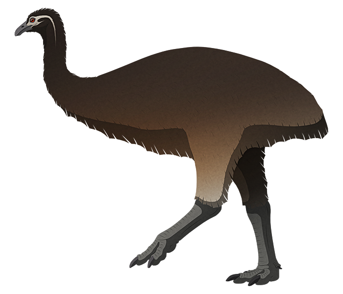 A stylized illustration of an extinct giant flightless bird. It has a tiny head with a downward-curving beak, a long neck, no wings at all, and long chunky legs.