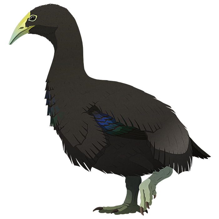 A stylized illustration of an extinct flightless bird. It has a triangular downward curving beak, a long neck, small wings, and short stout legs.