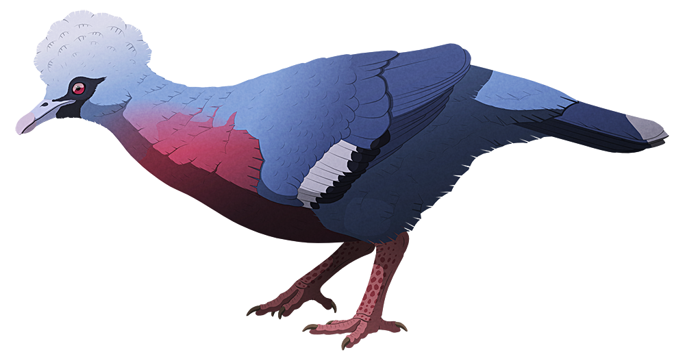 A stylized illustration of an extinct giant pigeon. It resembles a scaled-up crowned pigeon, with a slender beak, a large circular crest of feathers, small wings, and strong legs.