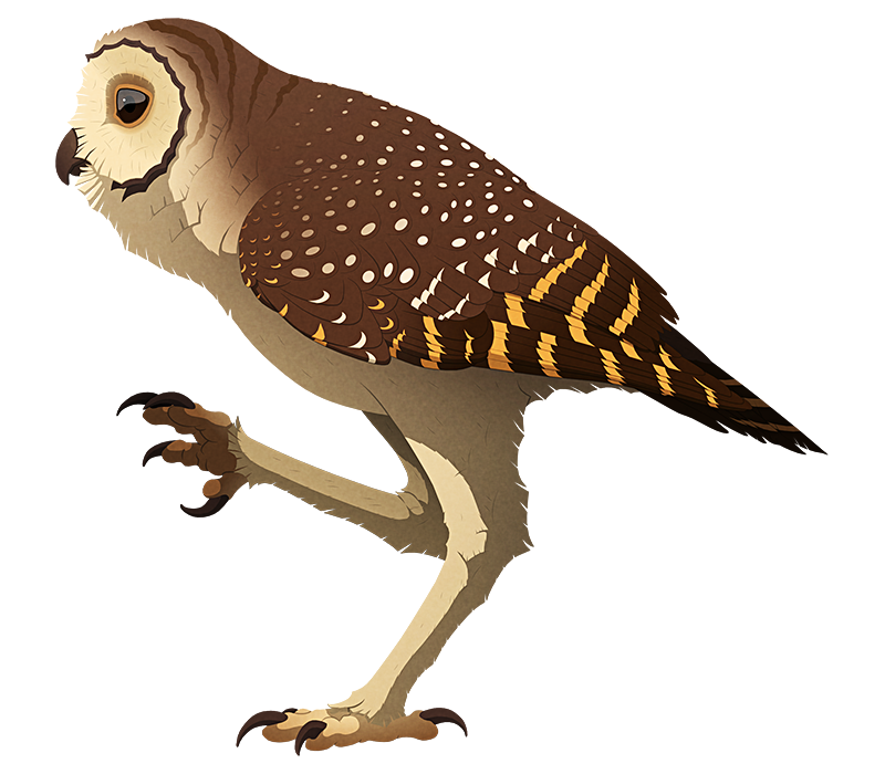 A stylized illustration of an extinct owl. It has short wings and very long stilt-like legs.