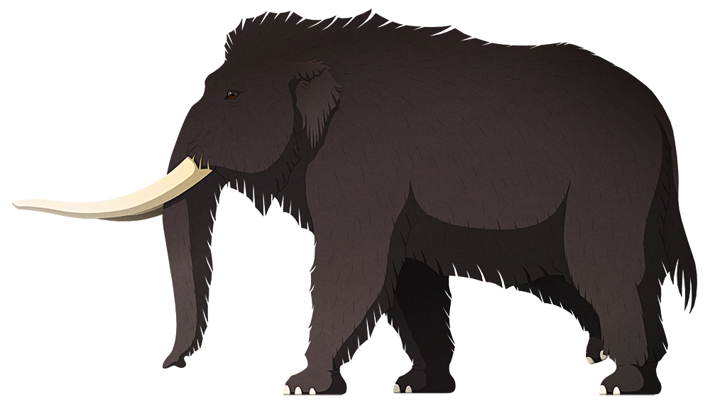 A stylized illustration of an extinct mammoth-like elephant. It has long twisting tusks, small ears, and a speculative coat of long hair.