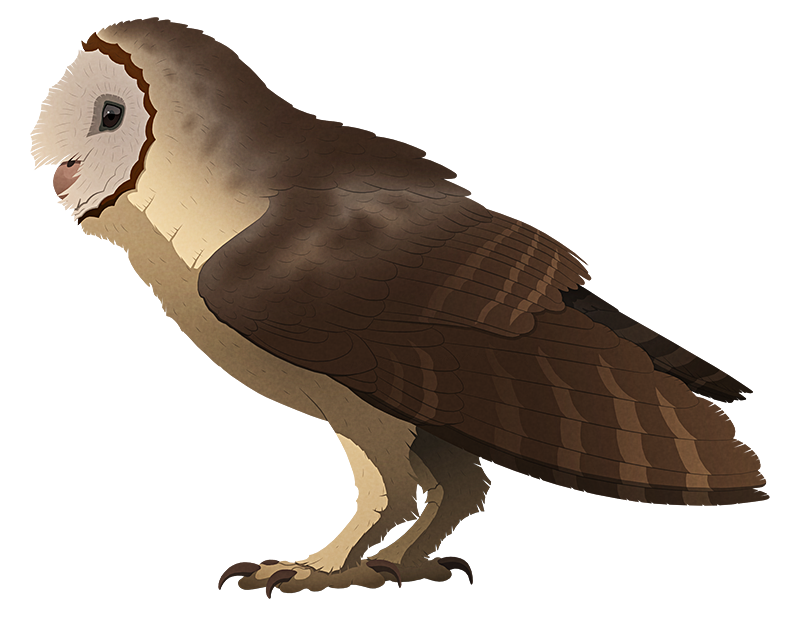 A stylized illustration of an extinct giant owl. It has large wings.