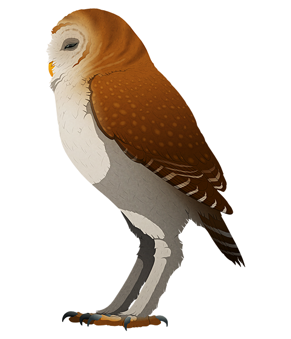 A stylized illustration of an extinct giant owl. It has proportionally short wings and long stilt-like legs.