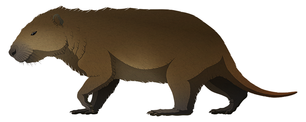 A stylized illustration of an extinct giant rodent. It has a capybara-like head with small eyes and a deep jaw, a rather bear-like body, and a mid-length rat-like tail.