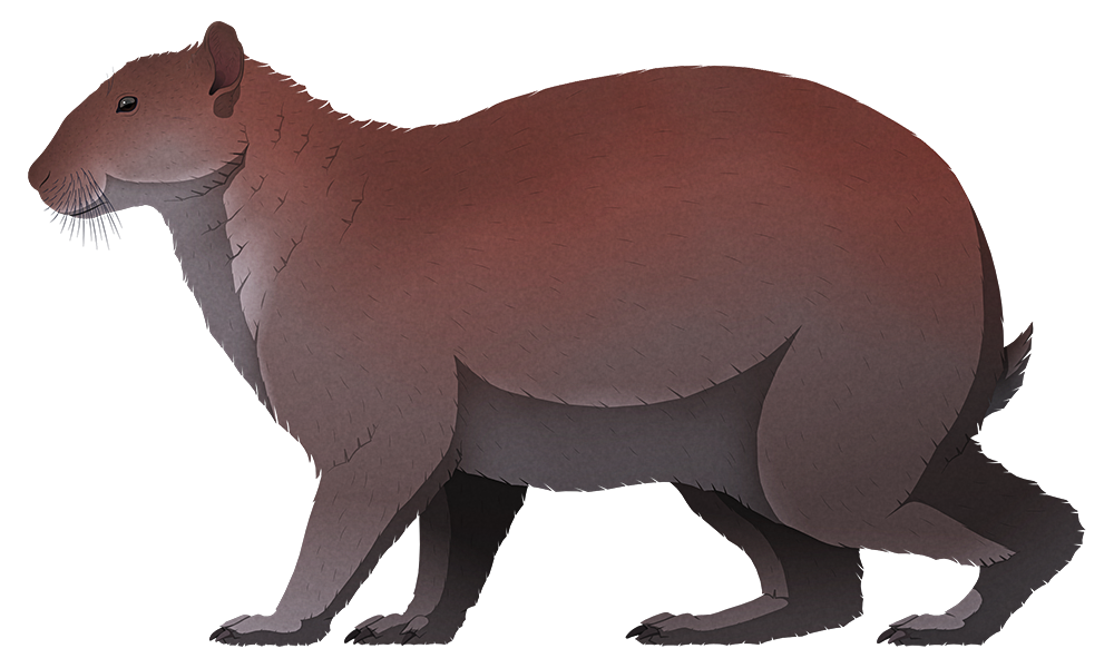 A stylized illustration of an extinct giant rabbit. It doesn't resemble a modern rabbut much at all, with a small head, tiny eyes and ears, a fat body and thick somewhat bear-like limbs.