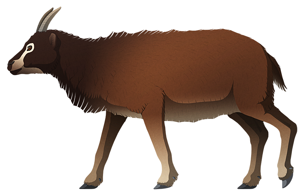 A stylized illustration of an extinct goat-like sheep. It has a short snout, oddly forward-facing eyes, short pointed horns, and a chunky body.