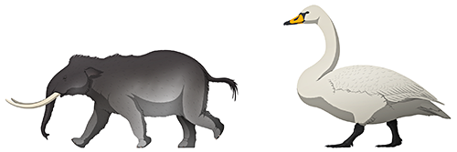 A scale comparison between a dwarf elephant and a giant swan. The swan is the taller of the two.