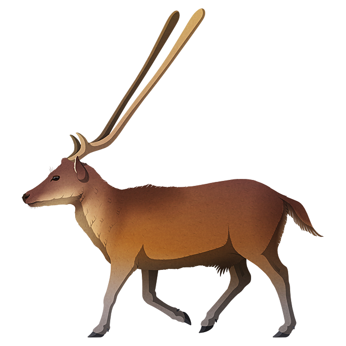 A stylized illustration of an extinct dwarf deer. It has proprtionally short legs and very odd antlers – each made up of a single long straight bar that widens into a rounded club-like shape at the tip.