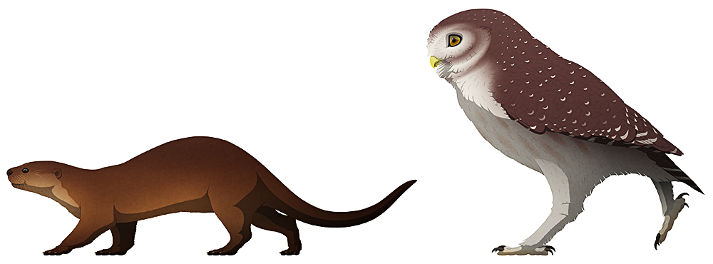 A stylized illustration of two extinct animals. The first is an otter with a blunt snout and chunky legs. The second is a much larger long-legged owl.