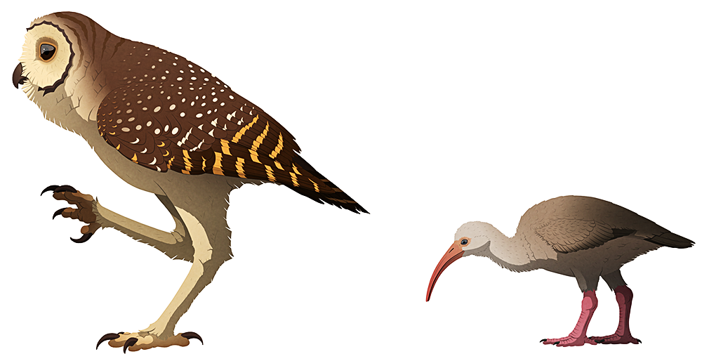 A stylized illustration of two extinct birds. The first is a tall owl with very long stilt-like legs, and the second is a smaller flightless ibis.