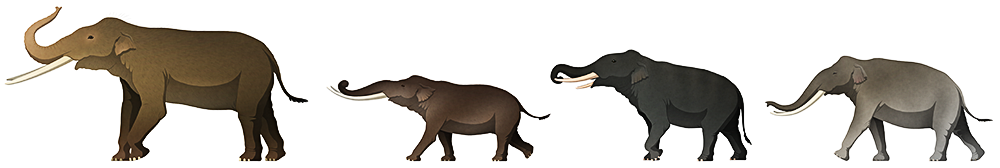 A stylized illustration of four extinct dwarf elephants. The first one is the largest, with long straight tusks. The second is the smallest, about half the size of the first, with long gently curving tusks and proprtionally short legs. The next two are intermediate in size, with one havng four tusks and the other having long curved tusks.
