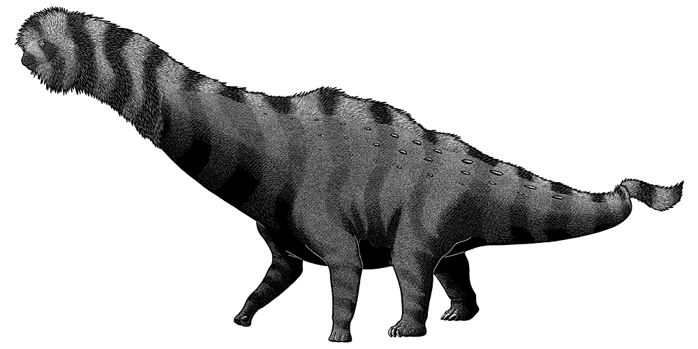 A black-and-white ink illustration of a long-necked sauropod dinosaur. It has sparse knobbly armored scales on its back, and a speculative mane of bristly feathers along its neck, back, and tail.
