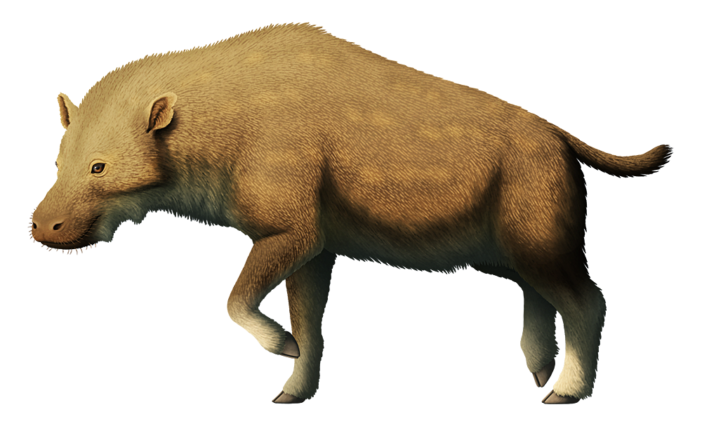 An illustration of an extinct entelodont, an omnivorous hoofed mammal. It has a hippo-like head and a body proportioned rather like a hyena, with high shoulders and long slender legs. It has cloven-hoofed feet and a short tail, and its body is covered in a coat of short bristly fur.