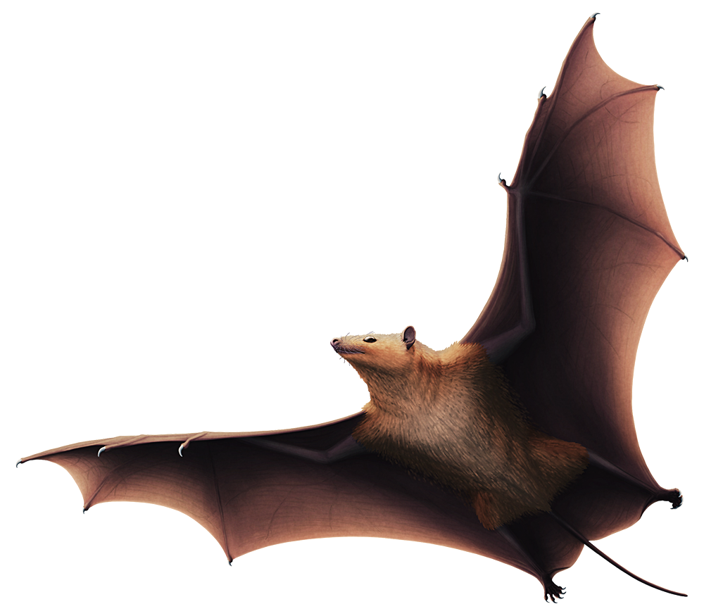 An illustration of an extinct early bat in flight. It has claws on all five fingers on each wing, along with small ears and a long tail.