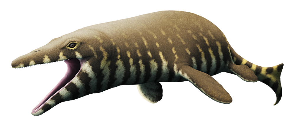 An illustration of an extinct mosasaur, an ancient marine reptile. It has long triangular jaws full of many small sharp teeth, a long lizard-like body, four paddle-like flippers, and a long tail ending in a vertical fin.